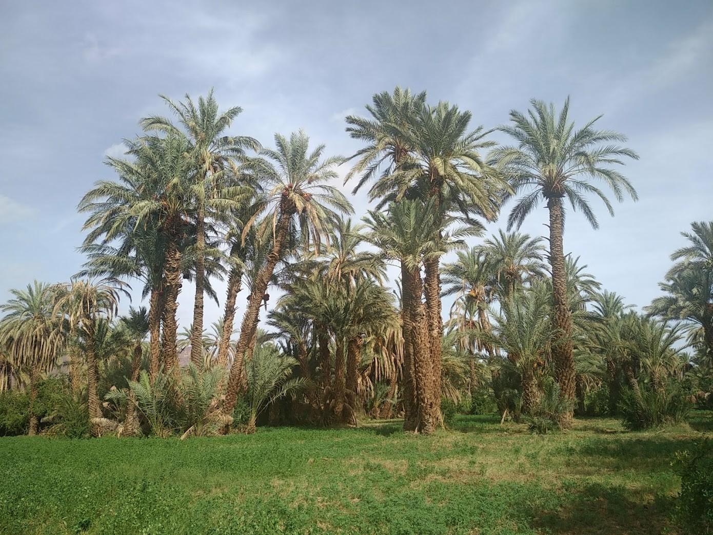 Maroc 111