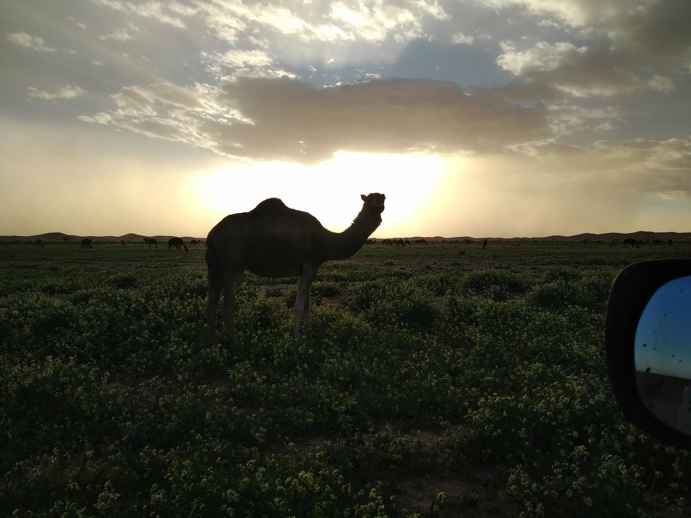 Maroc 88