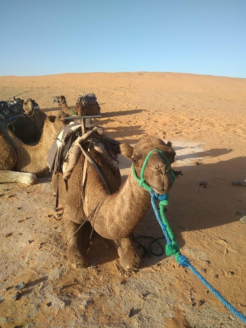 Maroc 99
